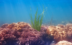 Coral and Seaweeds Found to Alter Microbial Composition of Tropical Reefs