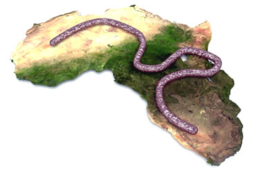 American Healthcare Workers Respond to Raging Ebola Outbreak in West Africa