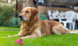 Stem Cell Procedures Proving Useful to Resolve Common Health Problems for Companion Animals