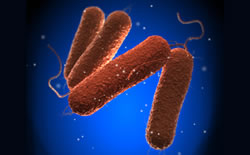 Salmonella Typhimurium Outbreak in 13 U.S. States Linked to Exposure to Clinical Microbiology Laboratory Classes